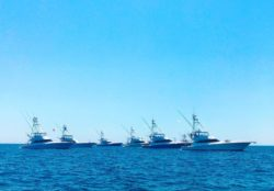 Sportifshing tournament: Orange Beach Billfish Classic
