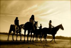 Horseback Riding on Anna Maria Island