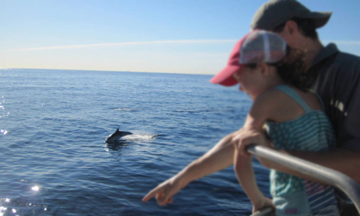 looking at marine life
