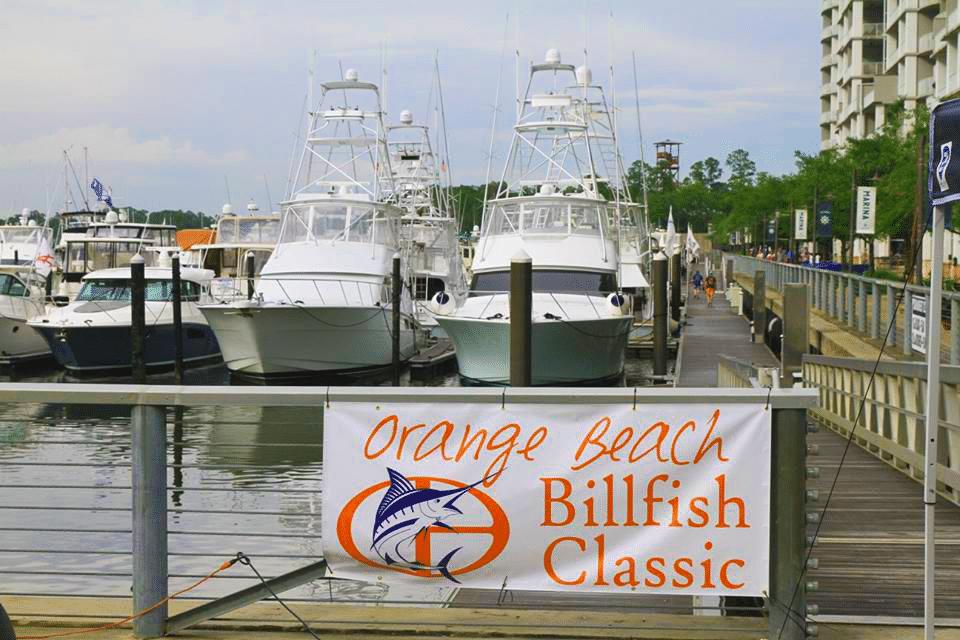Orange Beach Billfish Classic Marina