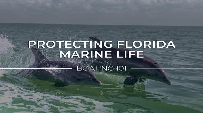 Protecting Florida marine life: boating 101
