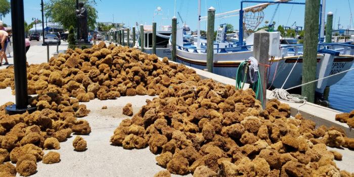 tarpons springs- gulf coast yacht charter