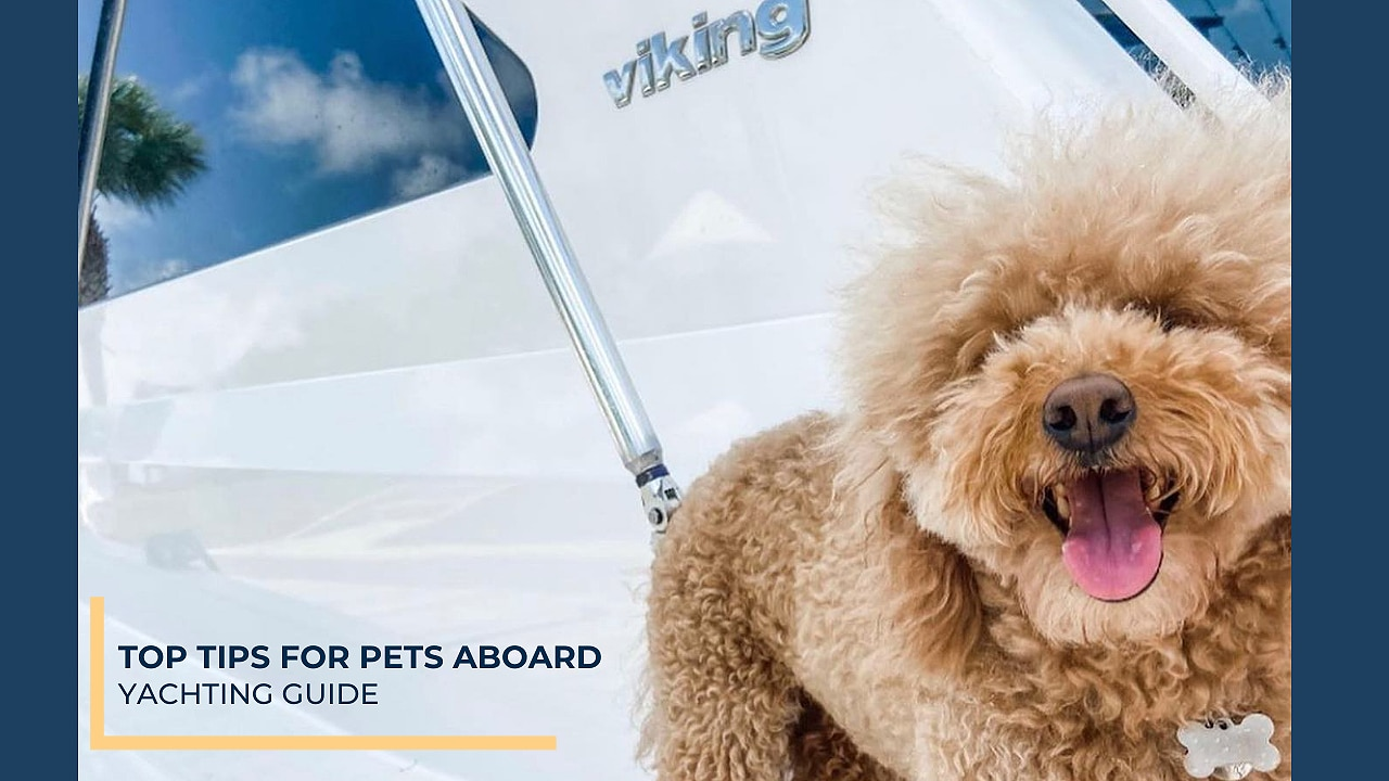 Top Tips for Pets Aboard | Yachting Guide